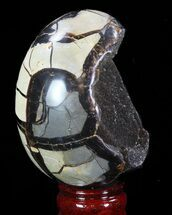 "Buy 4.1"" Septarian ""Dragon Egg"" Geode - Brown Crystals - #88516"