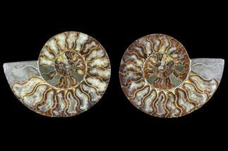 "5.1"" Cut & Polished Ammonite Pair - Agatized For Sale, #88388"
