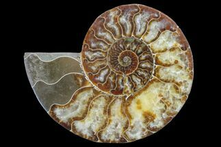 "6.25"" Agatized Ammonite Fossil (Half) - Madagascar For Sale, #88181"