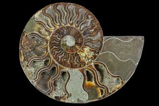 "4.5"" Agatized Ammonite Fossil (Half) - Madagascar For Sale, #88253"