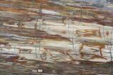 "12"" Polished Madagascar Petrified Wood Slab - Madagascar - #88608-1"
