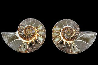 "Buy 3.85"" Cut & Polished Ammonite (Anapuzosia?) Pair - Madagascar - #88003"