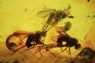 Buy Three Detailed Fossil Flies (Diptera) In Baltic Amber  - #90805