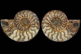 "6.75"" Cut & Polished Ammonite Fossil - Agatized For Sale, #91181"