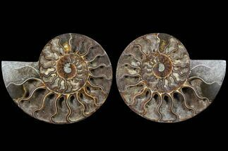 "6.85"" Cut & Polished Ammonite Fossil - Deep Crystal Pockets For Sale, #91187"