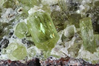 Buy Apatite Crystals with Quartz - Durango, Mexico - #91441