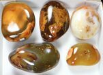 Wholesale Lot: 15lbs Colorful, Polished Carnelian Agate - 9 Pieces - #91850-1