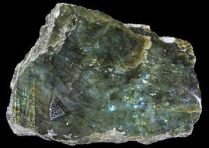 "7.3"" Wide, Single Side Polished Labradorite - Madagascar For Sale, #92066"