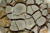 "16.1"" Cut Septarian Nodule With Pyrite With Stand - Spectacular! - #92666-1"