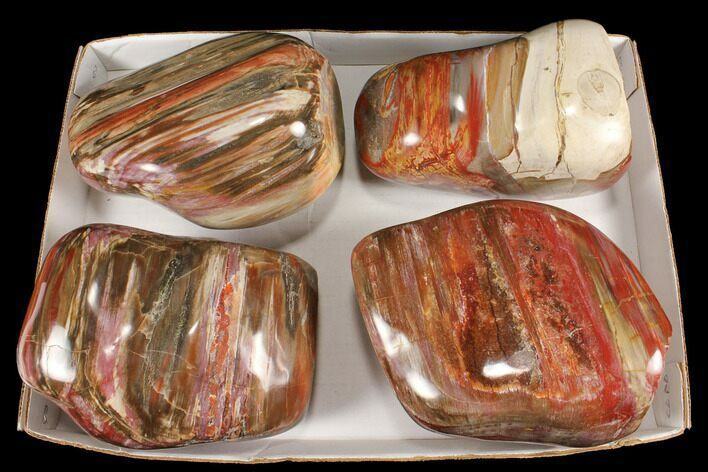 Wholesale Lot: 29+ Lbs Polished Petrified Wood - 4 Pieces