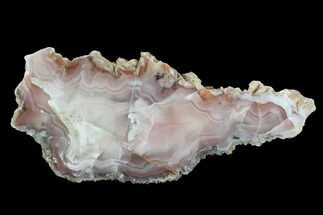 Quartz var. Agate - Fossils For Sale - #95451