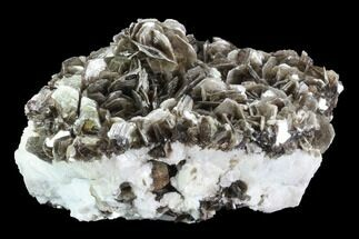 "Buy 7.9"" Muscovite On White Albite Association - Brazil - #95578"