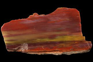 "Buy Polished Arizona Petrified Wood Section - 7.3"" - #94546"