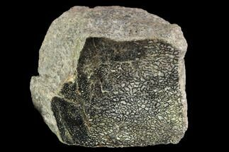 Unidentified Sauropod - Fossils For Sale - #96423