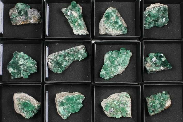 Wholesale Flat: Green, Fluorescent Rogerley Fluorite - 12 Pieces