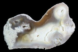 "3"" Agatized Fossil Coral Geode - Florida For Sale, #97916"