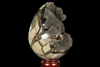 "Buy 4.9"" Septarian ""Dragon Egg"" Geode - Black Crystals - #98854"