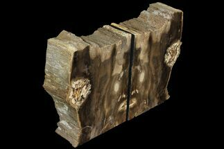 "5.6"" Petrified Wood Bookends - Oregon For Sale, #99311"