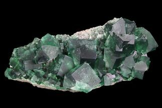 Fluorite  - Fossils For Sale - #99453