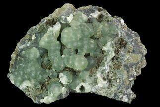 "Buy 3.3"" Botryoidal Prehnite Crystal Cluster - Connecticut - #100174"