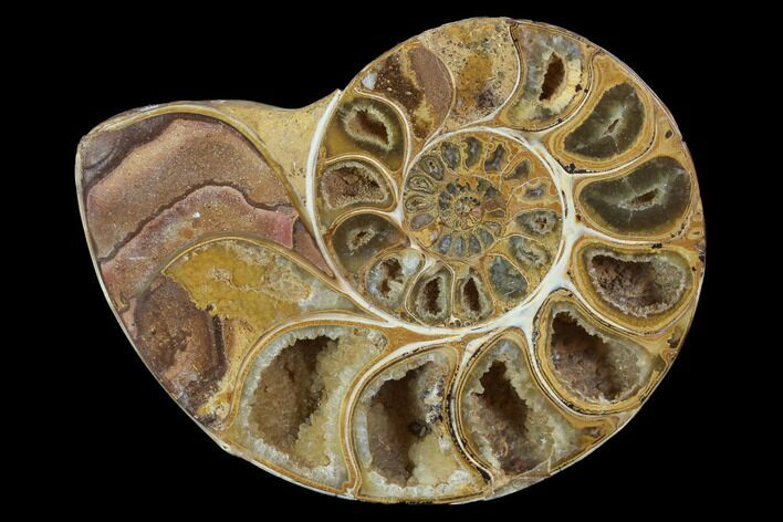 "3.5"" Sliced, Agatized Ammonite Fossil (Half) - Jurassic"
