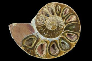 "3.75"" Sliced, Agatized Ammonite Fossil (Half) - Jurassic For Sale, #100559"
