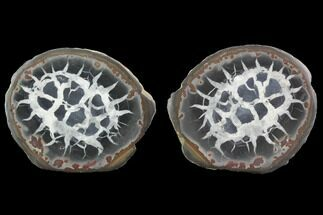 "2.9"" Cut/Polished Septarian Nodule Pair - Morocco For Sale, #101210"