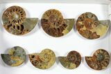 "Wholesale: 3-5"" Polished Ammonite Halves (Grade B/C) - 41 Pieces - #101437-1"