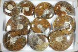 "Wholesale Lot: Polished Ammonites (3.9 -5.8"") - 10 Pieces - #101597-1"