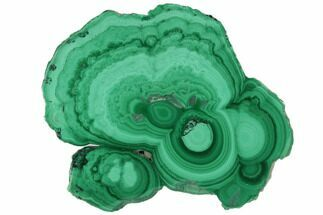 "1.5"" Polished Malachite Stalactite Slice - Congo For Sale, #101897"