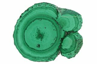 "Buy 1.3"" Polished Malachite Stalactite Slice - Congo - #101905"
