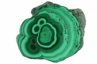 "Buy 1.9"" Polished Malachite Stalactite Slice - Congo - #101902"