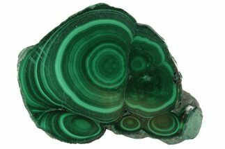 "Buy 1.4"" Polished Malachite Stalactite Slice - Congo - #101938"