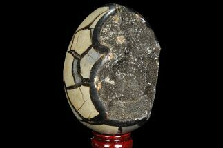 Septarian with Calcite  - Fossils For Sale - #88350