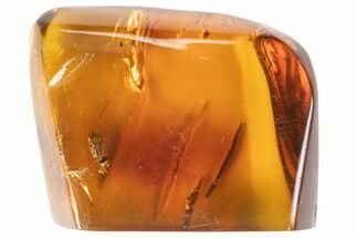 "1.32"" Polished Fossil Amber With Bug Inclusions (4 grams) - Mexico For Sale, #102482"