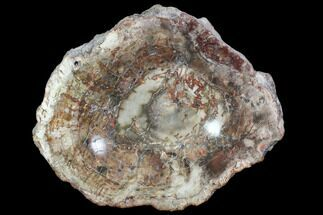 "Buy 9.6"" Colorful Polished Petrified Wood Bowl - Madagascar - #102880"