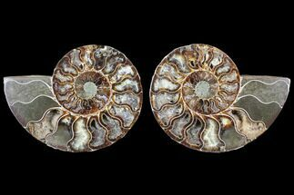 "Buy 4.35"" Cut & Polished Ammonite Fossil - Agatized - #103078"