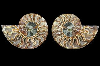 "Buy 4.3"" Cut & Polished Ammonite Fossil - Crystal Chambers - #103084"