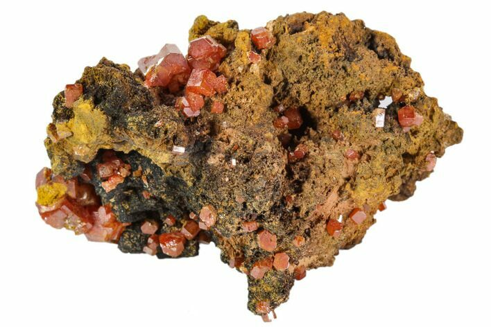 "1.8"" Red Vanadinite Crystals On Manganese Oxide - Morocco"