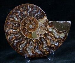 "3.9"" Cut and Polished Ammonite (Half) For Sale, #7340"
