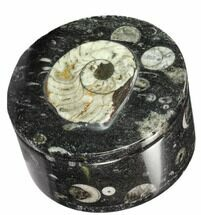 "3.5"" Round Fossil Goniatite & Orthoceras Jewelry Box For Sale, #104009"