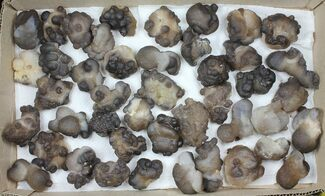 "Buy Wholesale Lot: 1.8 to 2.7"" Natural Chalcedony Nodules - 44 Pieces - #103741"