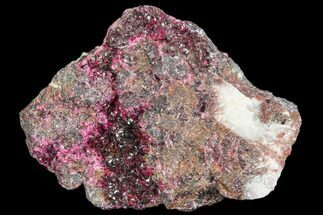 "2"" Magenta Erythrite Crystals on Matrix - Morocco For Sale, #104060"