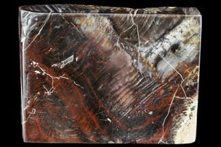 "6.1"" Colorful, Polished Petrified Wood Slab - Circle Cliffs, Utah For Sale, #104699"