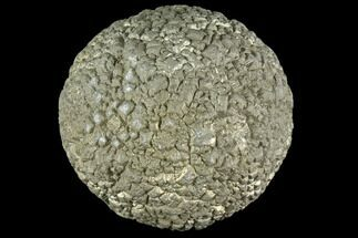 "Buy 1.3"" Natural Pyrite Concretion - China - #104710"