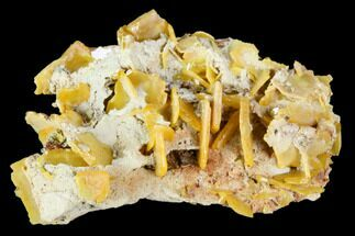 Wulfenite - Fossils For Sale - #105573
