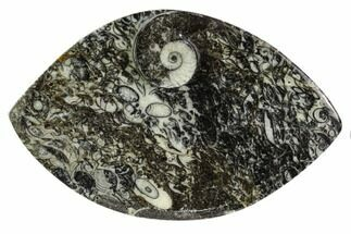 "5.5"" Wide, Fossil Goniatite Dish - Morocco For Sale, #106703"