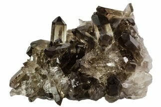 "Buy 3.5"" Dark Smoky Quartz Crystal Cluster - Brazil - #106966"