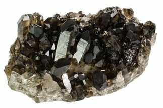 "5.5"" Dark Smoky Quartz Crystal Cluster - Brazil For Sale, #106970"