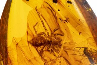 Fossil Spider (Aranaea) And Wasp (Hymenoptera) In Amber - Myanmar For Sale, #107582